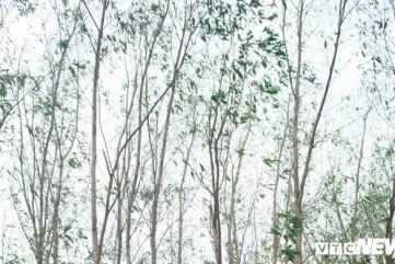 Cây trồng héo úa gần Công ty thép Hòa Phát Dung Quất: Chất lượng môi trường vẫn ổn