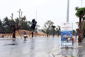 Quảng Ngãi lại tính thu nhiều hecta đất lúa cho doanh nghiệp làm bất động sản