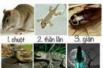 Bạn sợ nhất con gì?